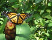 sebastien lallemant, The Monarch