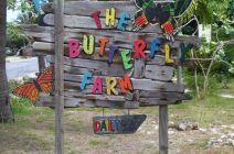 Driftwood sign, Aruba