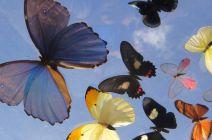A cloud of butterflies