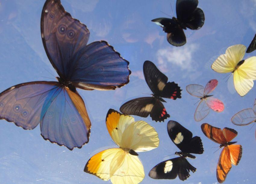 Butterfly Release   The Butterfly Farm St Maarten, St