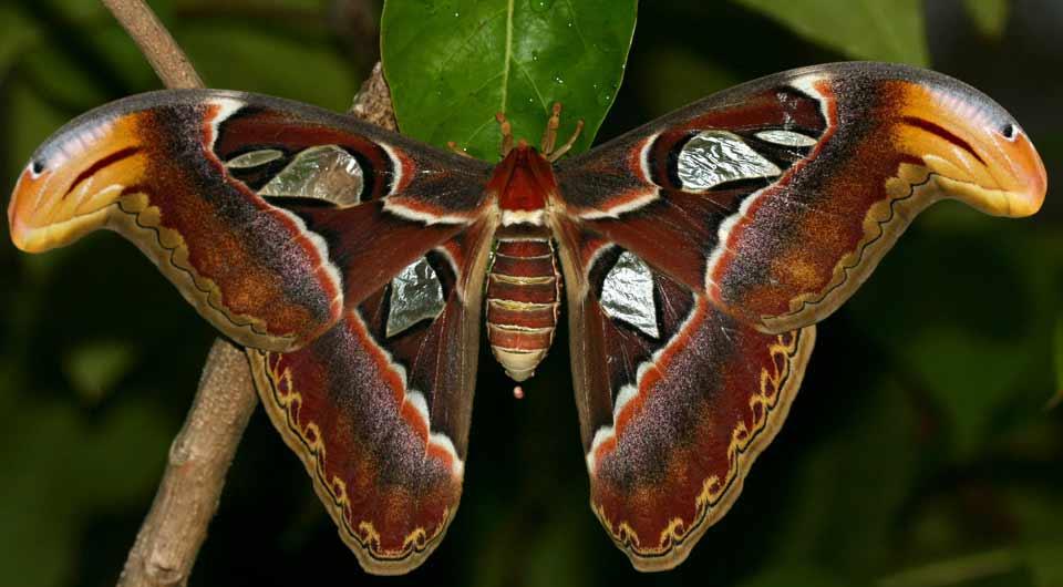 Symetric bfly